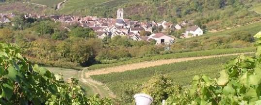 Visite du vignoble de Chablis