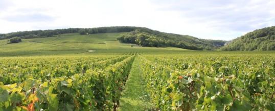 Hébergement en Bourgogne/Vins